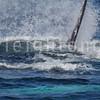 8-20-15-whales-leighton-3450