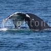 8-20-15-whales-leighton-3387