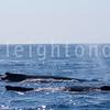 8-20-15-whales-leighton-3405
