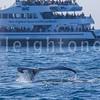 8-20-15-whales-leighton-3526