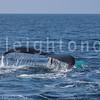 8-20-15-whales-leighton-3427