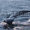 8-20-15-whales-leighton-3504