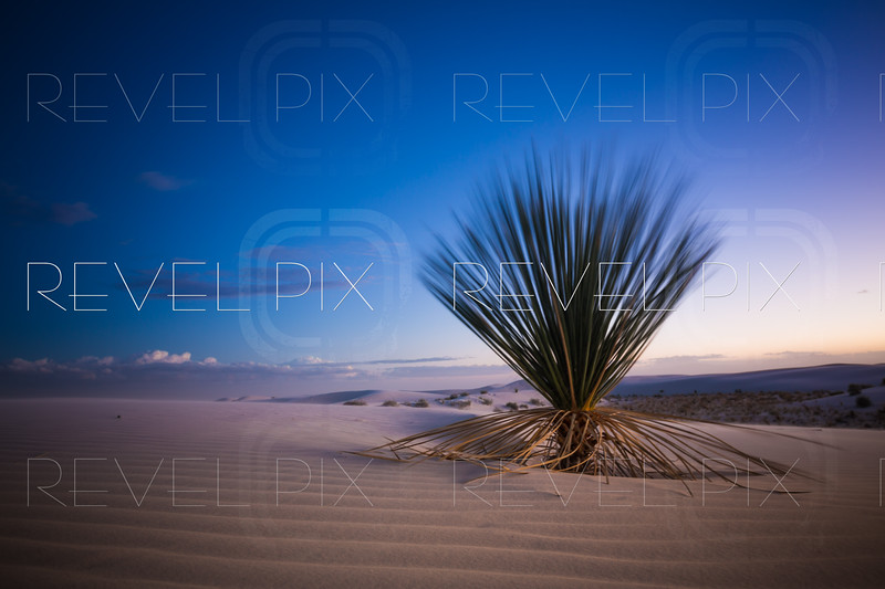 White Sands Cactus at Sunset