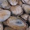 clams_12_23_13_IMG_7264