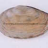clams_12_23_13_IMG_7335