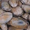 clams_12_23_13_IMG_7262