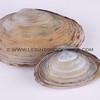 clams_12_23_13_IMG_7349