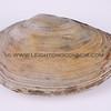 clams_12_23_13_IMG_7327