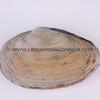 clams_12_23_13_IMG_7342