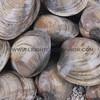 clams_12_23_13_IMG_7193