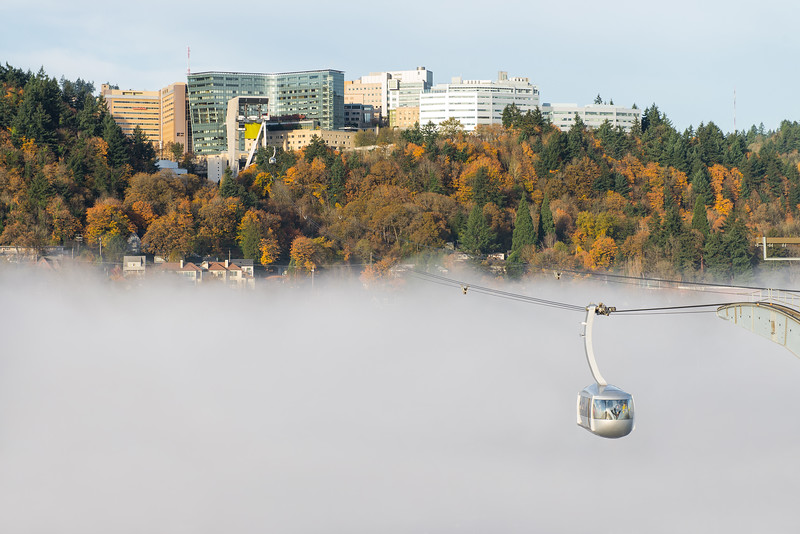 Marquam Hill Fog 2016
