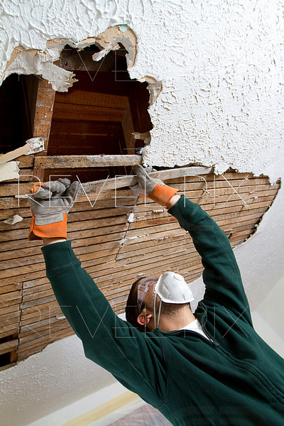 a young male pulls down plaster ceiling lathe with his hands. renovation. shot from below.