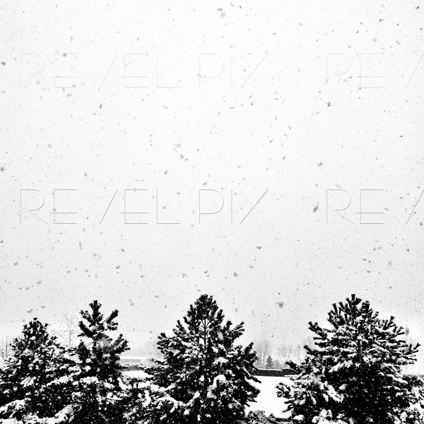 Mobilestock: a high shot of pine trees getting covered from thick snow fall from a winter storm in upstate NY. Apple iPhone, edited into black and white in postproduction