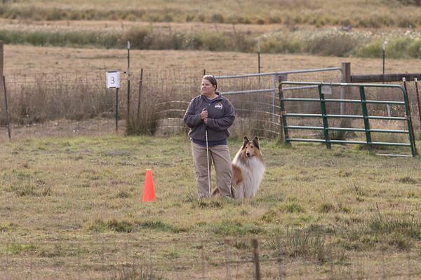 2017 Collie Western Regional Herding Trial