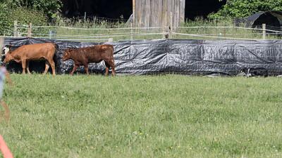 Stockdog/Herding Trials