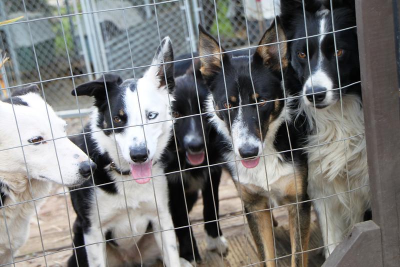 Gang-o-dogs<br /> 1/23/10