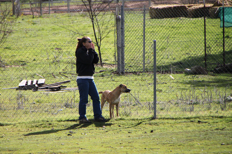 Amelia's neighbor's dog likes to help.  It almost looked like she knows Amelia's whistles!<br /> 1/23/10