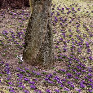 Struggling_spring_Stockholm_2761q2_1