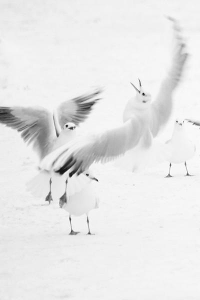 Bird life Strömmen