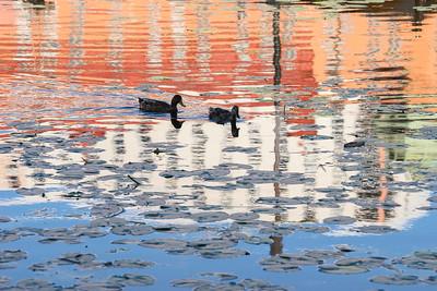 Bird life reflection