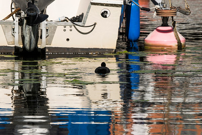 Boat and bird city life