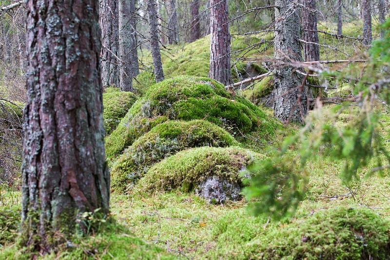 Forest in Stockholm