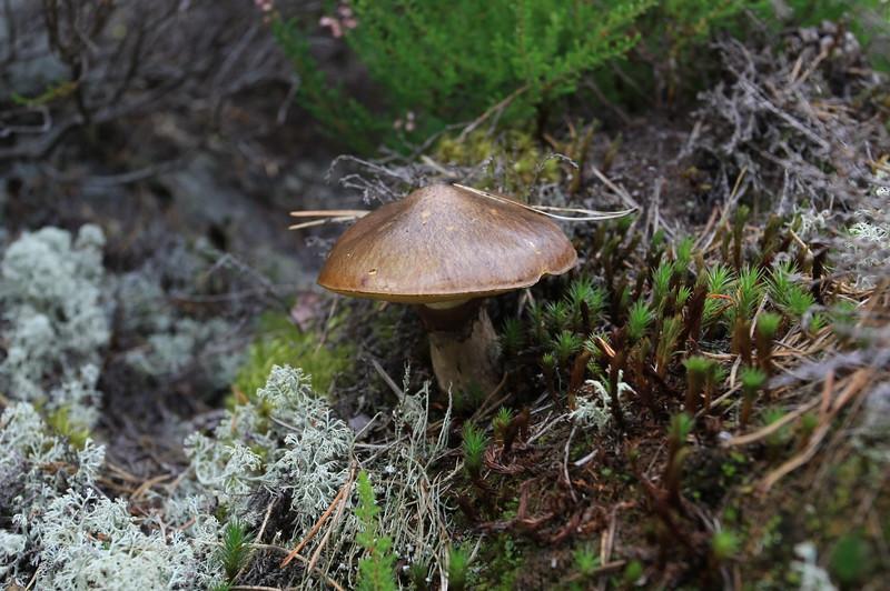 Mushroom in forest, Stockholm