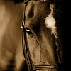 Dressage Horse Headshot Photo