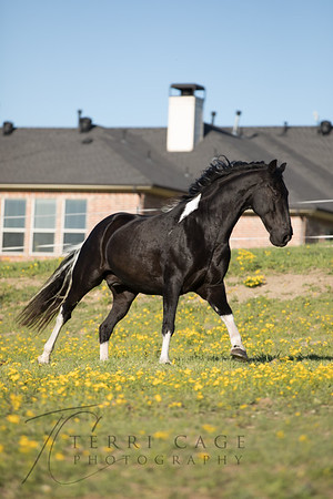 Equine Stock Images-Edited images (new)