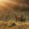 Kiger Mustang Sun