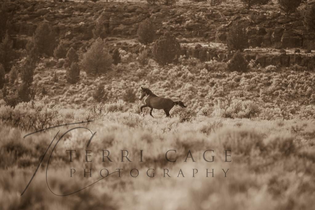 Kiger Mustang II