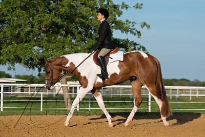 Equine Stock Images-Disciplines