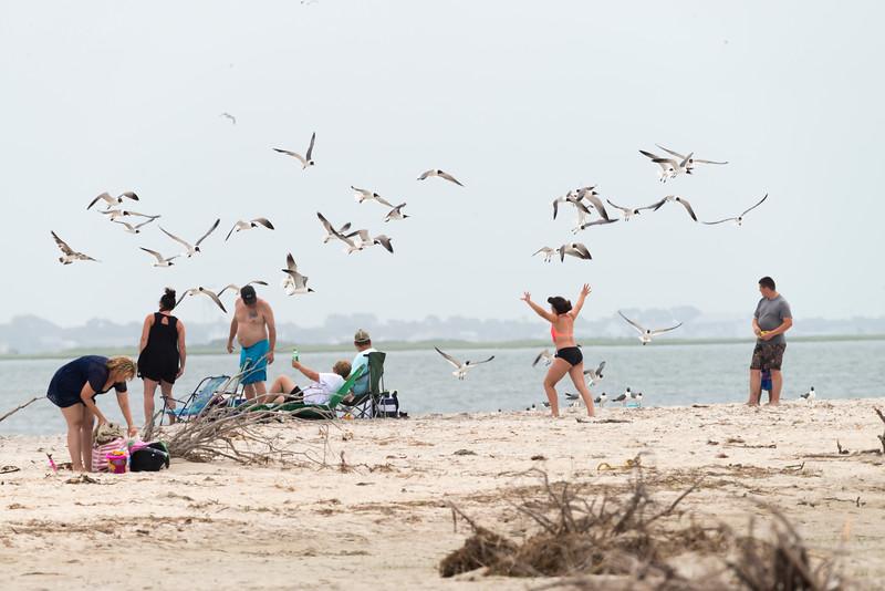 On beach feeding the gulls