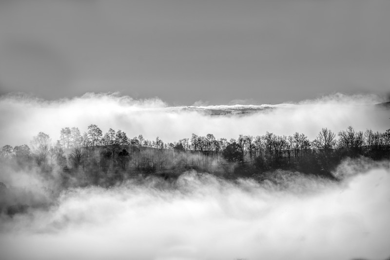 Trees sticking up above the clouds