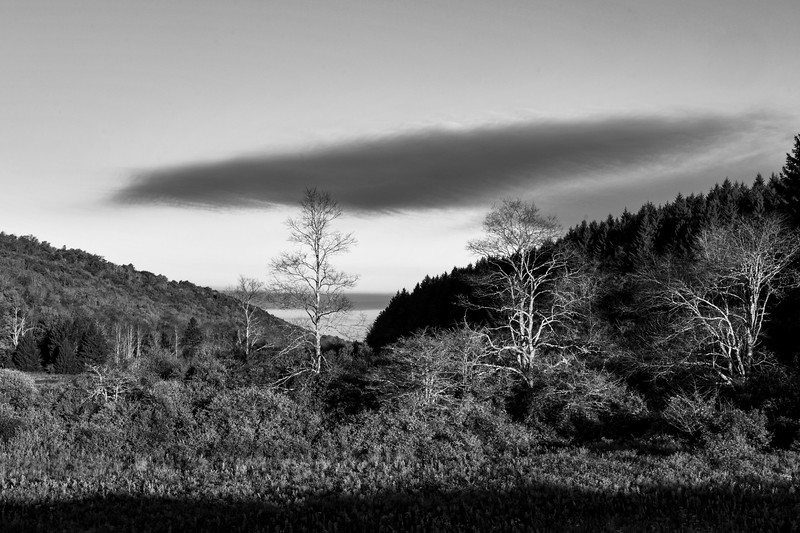 Balck and white cloud over trees