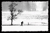 Cross Country Skiier Canaan Valley ..................................................................Prints or digital files can be purchased by e mailing DFriend150@gmail.com