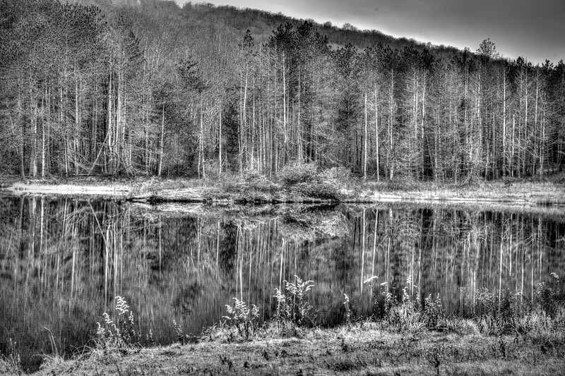 Harsh reflection of trees in water