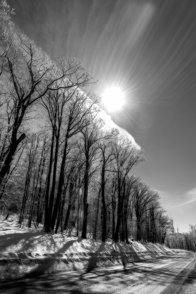 Sun striking tree branches with ice on limbs - BW