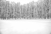 Black and white of snow covered trees along the edge