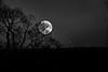 Full moon behind trees