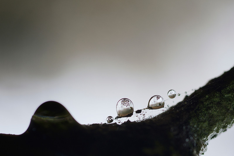 """beads of rain with particles floating<br /> <br /> to purchase - <a href=""""http://dan-friend.artistwebsites.com/featured/beads-of-rain-with-particles-floating-dan-friend.html?newartwork=true"""">http://dan-friend.artistwebsites.com/featured/beads-of-rain-with-particles-floating-dan-friend.html?newartwork=true</a>                                                                              ..................................pixel paintography"""