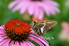 """Moth on flower<br /> <br /> to purchase - <a href=""""http://dan-friend.artistwebsites.com/featured/moth-on-flower-dan-friend.html"""">http://dan-friend.artistwebsites.com/featured/moth-on-flower-dan-friend.html</a>           .................................................................pixel paintography"""