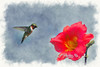"""Hummingbird zooming in on flower<br /> <br /> to purchase - <a href=""""http://dan-friend.artistwebsites.com/featured/the-ruby-throated-hummingbird-coming-up-to-red-flower-dan-friend.html"""">http://dan-friend.artistwebsites.com/featured/the-ruby-throated-hummingbird-coming-up-to-red-flower-dan-friend.html</a>           .................................................................pixel paintography"""