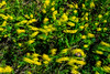 Wild flowers in motion on prairie of South Dakota