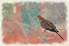 """Mourning Dove on branch<br /> <br /> to purchase - <a href=""""http://dan-friend.artistwebsites.com/featured/mourning-dove-on-branch-dan-friend.html"""">http://dan-friend.artistwebsites.com/featured/mourning-dove-on-branch-dan-friend.html</a>           .................................................................pixel paintography"""