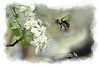 """Bubble bee looking for nectar<br /> <br /> to purchase - <a href=""""http://dan-friend.artistwebsites.com/featured/bubble-bee-looking-for-nectar-dan-friend.html?newartwork=true"""">http://dan-friend.artistwebsites.com/featured/bubble-bee-looking-for-nectar-dan-friend.html?newartwork=true</a>           .................................................................pixel paintography"""