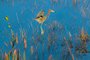 Heron flying in for landing - paintogaphy