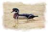Pretty wood duck watercolor borders  paintography