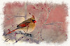 Portrait of female cardinal