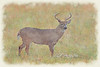 """Buck In Field<br /> <br /> Framed, metal, canvas order at this website - <a href=""""http://fineartamerica.com/featured/buck-in-field-dan-friend.html"""">http://fineartamerica.com/featured/buck-in-field-dan-friend.html</a>           .................................................................pixel paintography"""